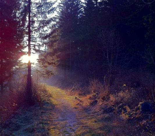 ORF-Fernsehbeitrag zur saisonal abhängigen Depression